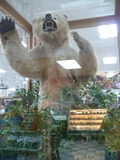 なぜ、スーパーにクマの剥製。