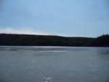 ユーコンブリッジのあたりは川幅も狭いので、川の流れはより速いようです...